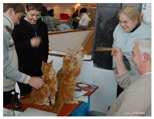 Cats Shows Photo • Выставки кошек - November, 2011 • Кубок Hill's • Донецк - Lili Anciau and Henry Hornell love cats...