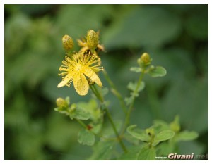 Givani.net - Flowers Photo • Цветы фото - Yellow flower