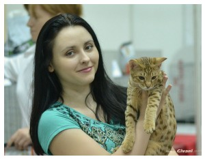 Cats Shows Photo • Выставки кошек - Cats Show • June, 2013 • Donetsk - 52