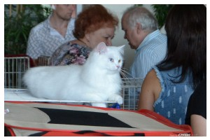 Cats Shows Photo • Выставки кошек - Cats Show • June, 2015 • Донецк - 12