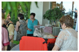 Cats Shows Photo • Выставки кошек - Cats Show • June, 2015 • Донецк - 17